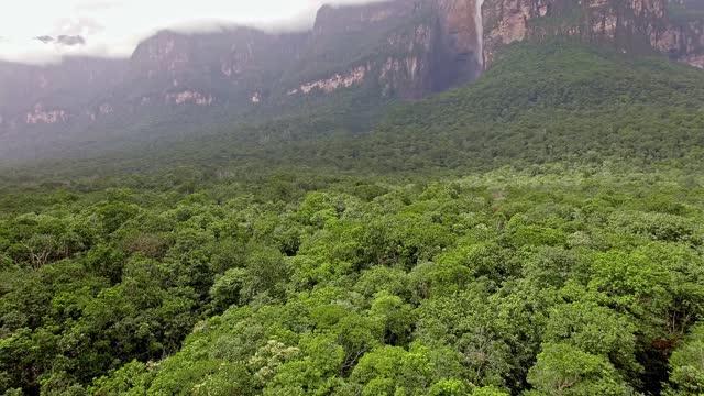 vídeos de stock, filmes e b-roll de vista aérea da densa floresta tropical nas cataratas do anjo no parque nacional de canaima. venezuela - américa latina