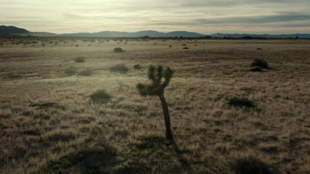 vídeos de stock e filmes b-roll de aerial view of desert in mojave - chaminé de fada