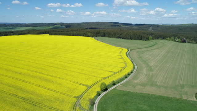 Aerial view of dirt road in rural landscape with agricultural fields (Oilseed rape field) and forest, springtime. Saale-Orla-Kreis, Thuringia, Schleiz, Germany.
