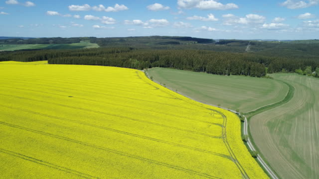 aerial view of dirt road in rural landscape with agricultural fields (oilseed rape field) and forest, springtime. saale-orla-kreis, thuringia, schleiz, germany. - landschaft stock-videos und b-roll-filmmaterial