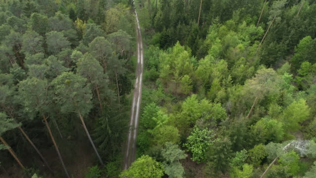 Aerial view of dirt road through forest, springtime. Franconia, Bavaria, Germany, Europe.