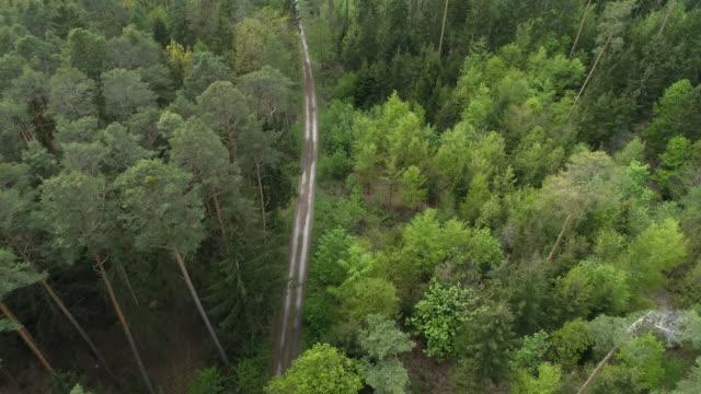 vidéos et rushes de aerial view of dirt road through forest, springtime. franconia, bavaria, germany, europe. - facilité d'accès