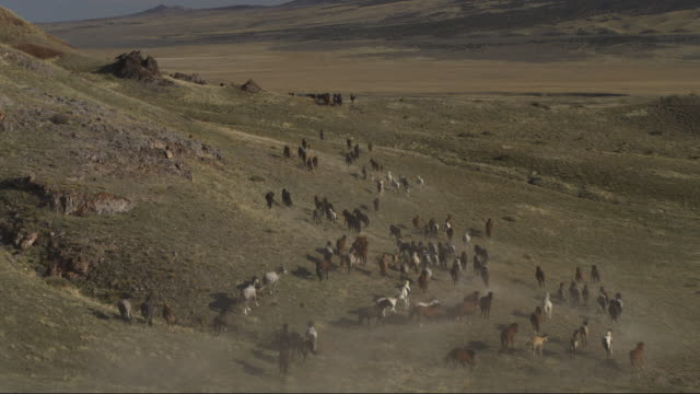 aerial view of distant herd of horses running into valley / dugway, utah, united states - herde stock-videos und b-roll-filmmaterial