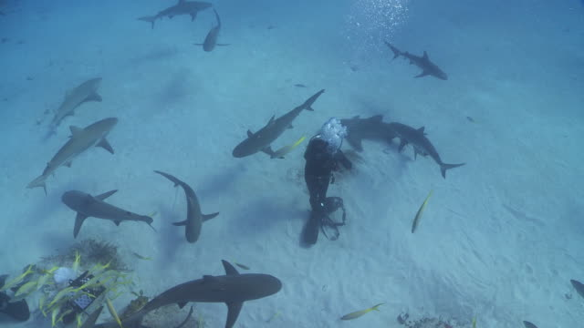 vidéos et rushes de aerial view of diver photographing circling reef sharks - seulement des hommes