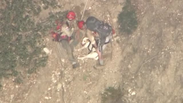 ktla aerial view of dog rescue after falling 600 feet from cliff in san gabriel mountains - 解放する点の映像素材/bロール