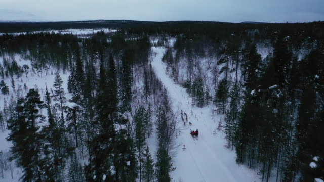 aerial view of dog sledding on deep snow forest in winter season - sledge stock videos & royalty-free footage