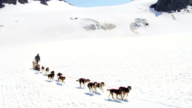 Aerial view of dogsledding Alaska, USA