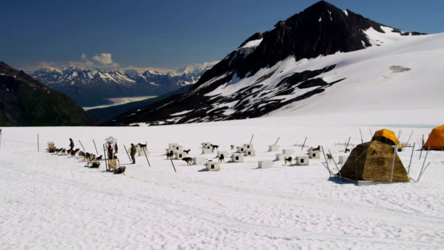 aerial view of dogsledding base camp, alaska - malamute stock videos and b-roll footage