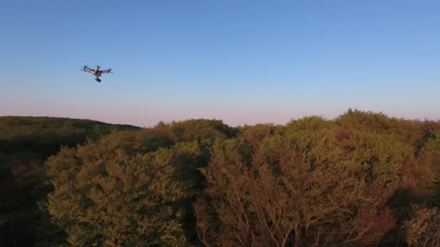 Aerial view of drone flying above forest at sunrise