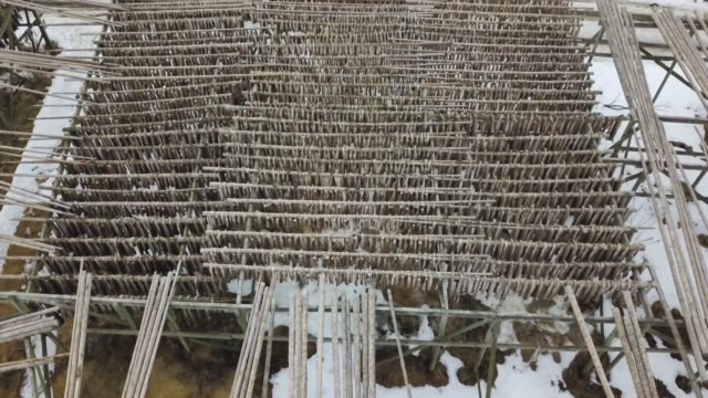 aerial view of dry fish hanging on wooden racks in lofoten, norway. - dry stock videos and b-roll footage