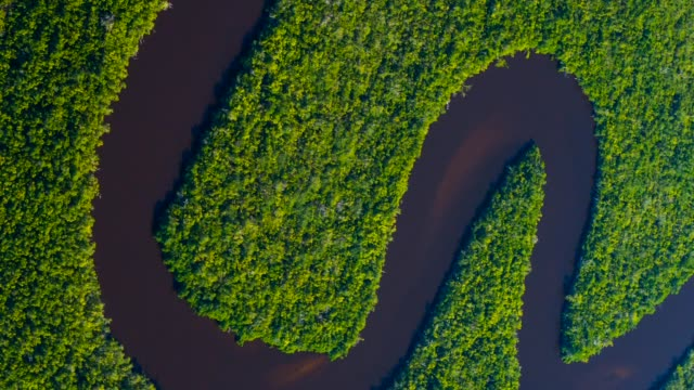 aerial view of everglades national park - river mississippi stock videos & royalty-free footage