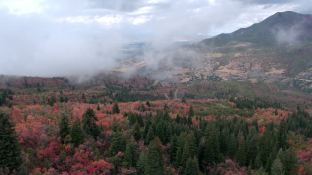 aerial view of fall trees, low hanging clouds, and a mountain. - provo stock videos and b-roll footage