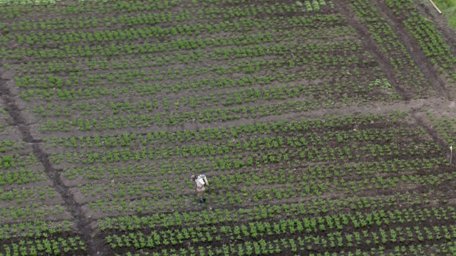 aerial view of farmer spraying pesticides in field, colombia - latin america stock videos & royalty-free footage