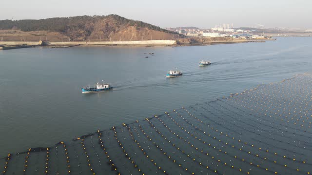 aerial view of farmers breeding kelp on february 27, 2021 in weihai, shandong province of china. - kelp stock videos & royalty-free footage