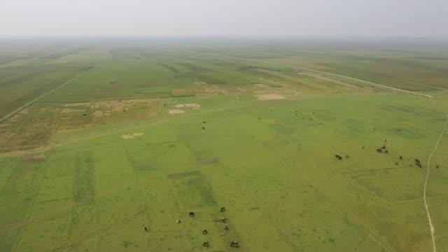 vidéos et rushes de aerial view of farmers harvest rice using cart in bangladesh - animaux au travail