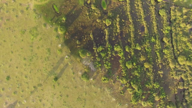 aerial view of farmland at sunset - goias, brazil - cerrado stock videos & royalty-free footage