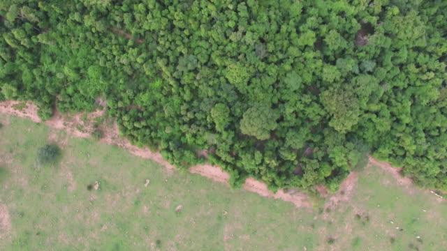 aerial view of farmland at sunset - cerrado stock videos & royalty-free footage