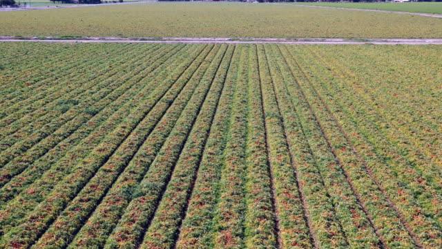 aerial view of farmland in california - attrezzatura per l'irrigazione video stock e b–roll