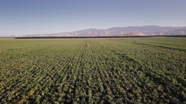 4k aerial view of farmland in san joaquin valley - land stock videos & royalty-free footage