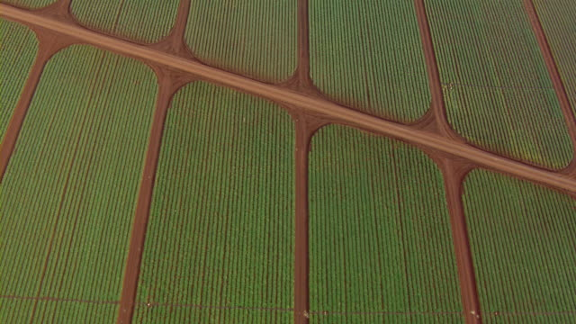 aerial view of farmland near kahuku on the north shore of oahu, hawaii. - turtle bay hawaii stock videos & royalty-free footage