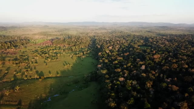 aerial view of farmland next to protected indigenous amazonian tribe land in brazil - stamm stock-videos und b-roll-filmmaterial