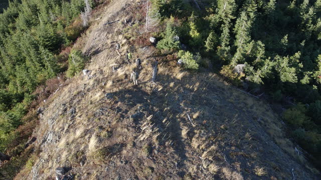ts aerial view of father and daughters hiking down hill during backpacking trip on fall afternoon - dirt track stock videos & royalty-free footage