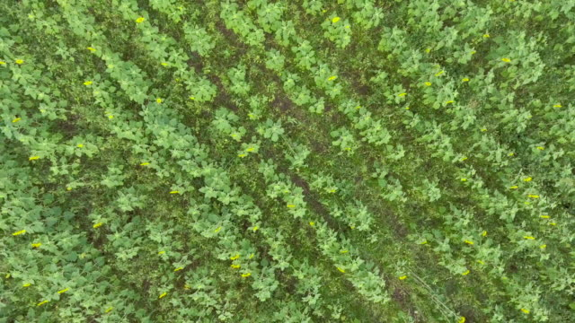 aerial view of field farm - air to air shot stock videos & royalty-free footage