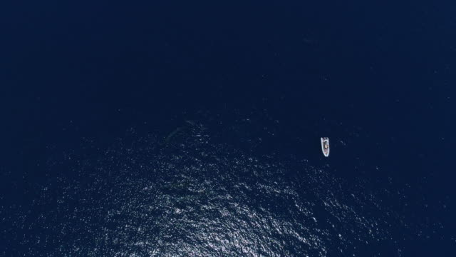 aerial view of fin whales close to a whale watching boat - whale watching stock videos & royalty-free footage
