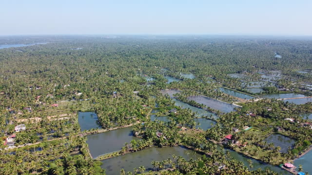 aerial view of fish and shrimp farms in munroe island backwaters - backwater stock videos & royalty-free footage