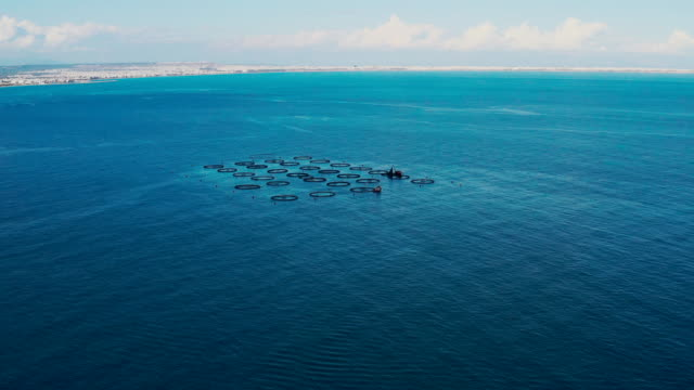 aerial view of fish farm - omega 3 stock videos & royalty-free footage