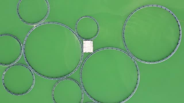 養殖場の空中写真 - 酸点の映像素材/bロール