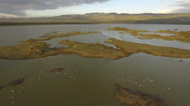 vídeos y material grabado en eventos de stock de aerial view of flamingos and waterbucks at lake elementaita shoreline - cuello de animal
