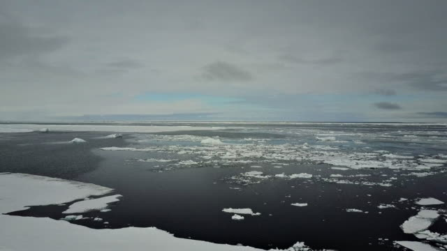 aerial view of floating sea ice near the ice floe edge, northern baffin island, canada, during late may before the ice has melted. - norra stilla havet bildbanksvideor och videomaterial från bakom kulisserna