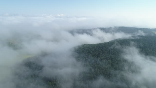 aerial view of fog at morning in forest. franconia, bavaria, germany, europe. - spiritualität stock-videos und b-roll-filmmaterial
