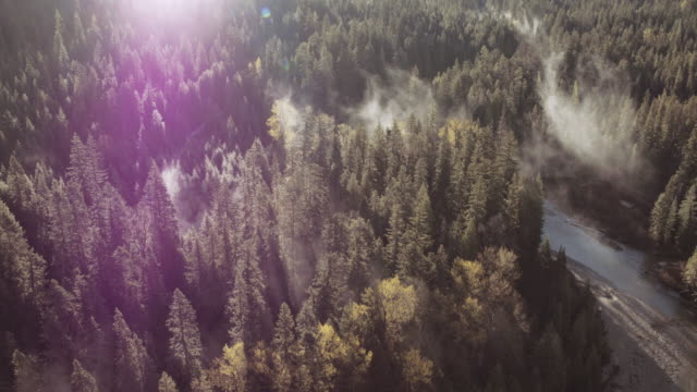 aerial view of fog coming off a river in the forest - biological process stock videos & royalty-free footage