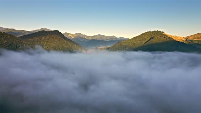 luftaufnahme von nebel rollt über fließenden über regenwald berg, dolly schuss - tropischer baum stock-videos und b-roll-filmmaterial