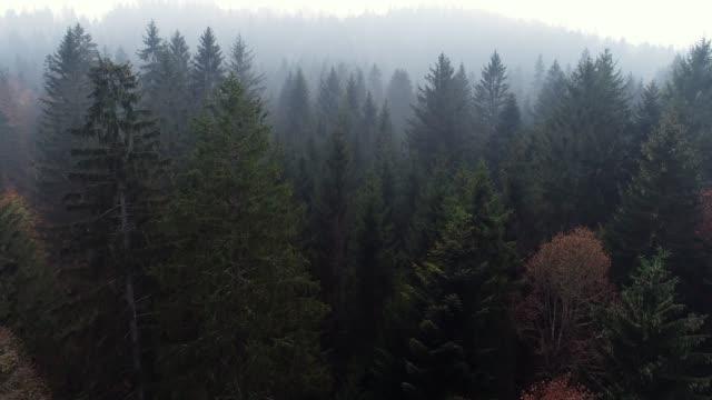 vídeos y material grabado en eventos de stock de vista aérea del bosque de niebla - cima del árbol