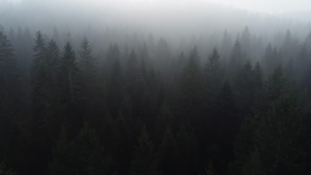 aerial view of foggy forest - dark stock videos & royalty-free footage