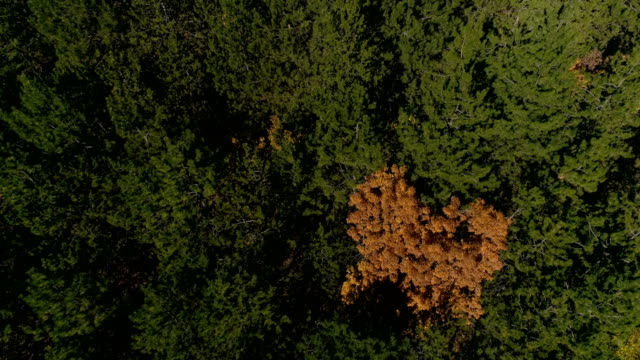 Aerial view of forest 4k