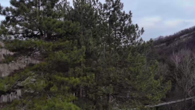 vídeos y material grabado en eventos de stock de vista aérea del bosque y el río - protección de fauna salvaje