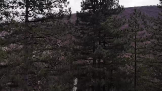 aerial view of forest and river - pinaceae stock videos & royalty-free footage