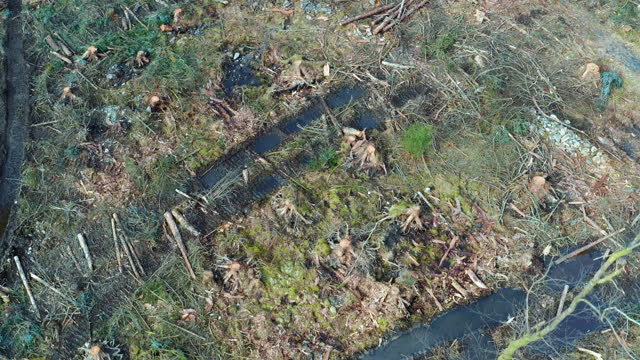 aerial view of forest area after tree felling - forestry industry stock videos & royalty-free footage