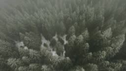 Aerial view of forest covered with snow and fog