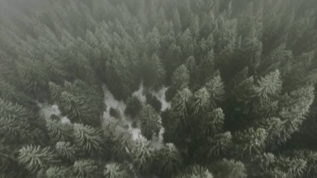 aerial view of forest covered with snow and fog - snowcapped mountain stock videos & royalty-free footage
