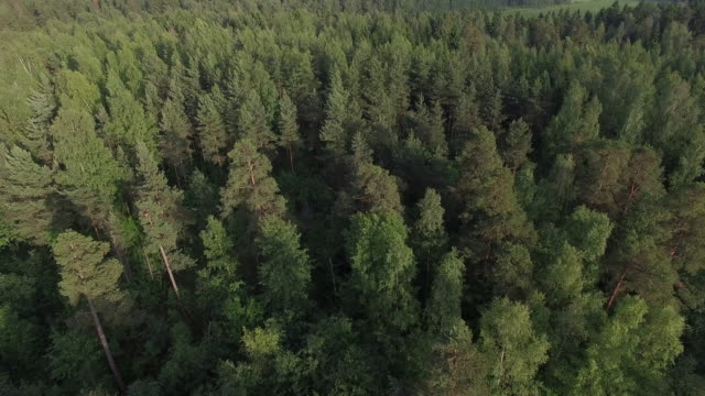 aerial view of forest, finland - finnland stock-videos und b-roll-filmmaterial