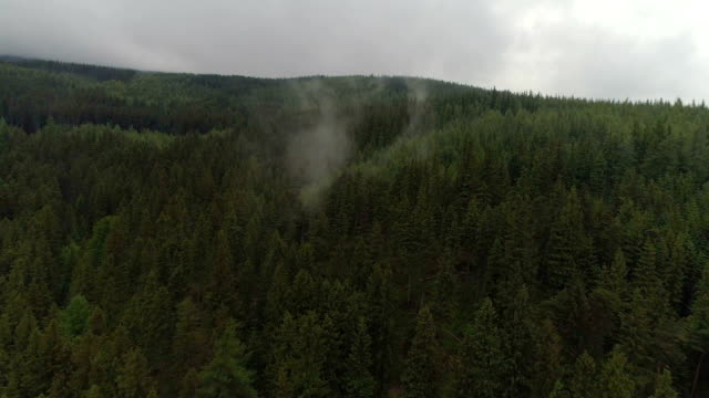 aerial view of forest in karpacz poland - poland stock videos & royalty-free footage