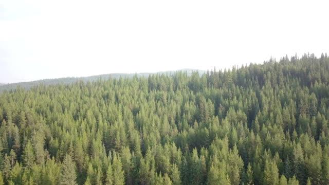 モンタナ州の森林の航空写真 - 寒帯林点の映像素材/bロール