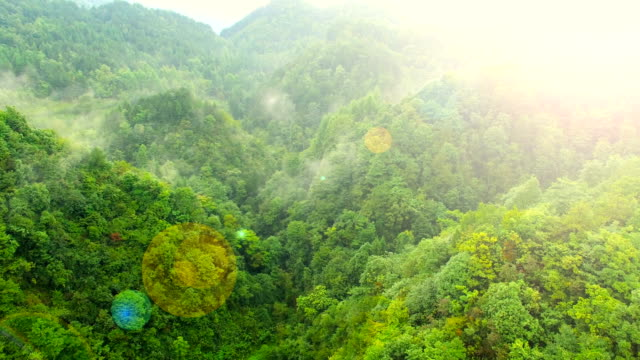 Aerial View of Forest in Mountain