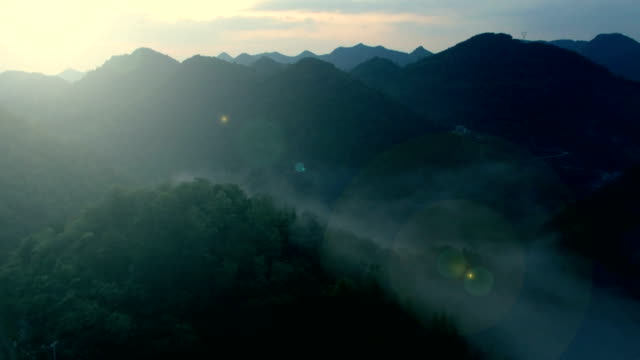 Aerial view of forest in mountains