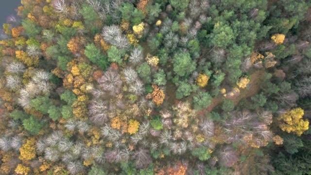 aerial view of forest in the fall - scandinavia stock videos & royalty-free footage
